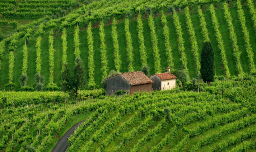 Ar teko lankytis gražiausiuose Italijos vynuogynuose?